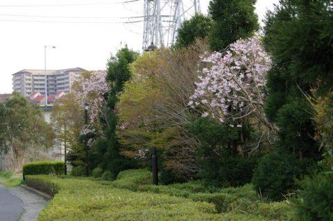花見川霊苑前